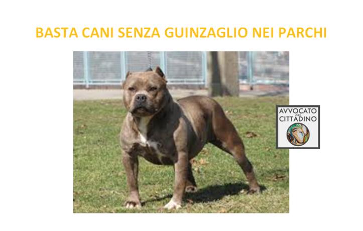 CANI-SENZA-GUINZAGLIO