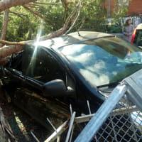 maltempo-a-roma-alberi-caduti-ed-auto-distrutte-5